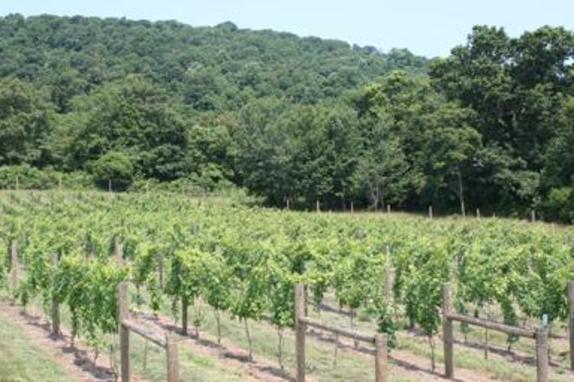 35744_5050_Notaviva Vineyards.JPG