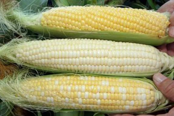 9322_6013_farmer john 2.jpg