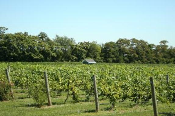 96203_5027_Hiddencroft vineyard.JPG