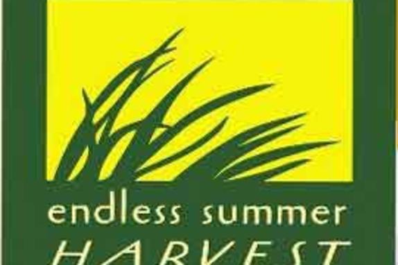 endless summer logo