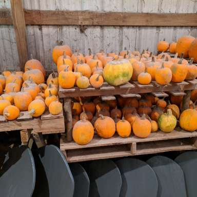 The Great Pumpkin Patch Pop-Up
