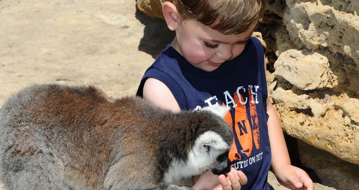 A small child feeds a lemur at Tanganyika Wildlife Park