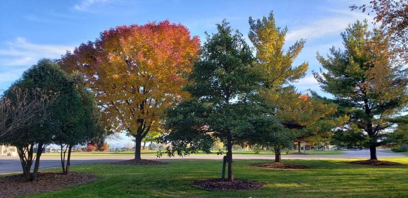 Fall Colors at Prairie Springs