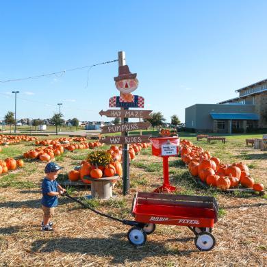 Pumpkins on the Prairie