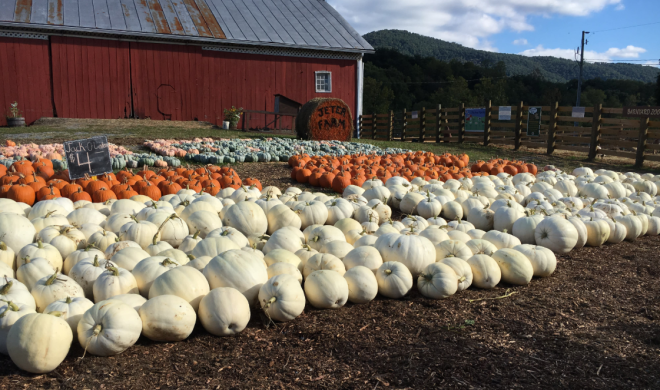 Jeter Farm Pumpkins