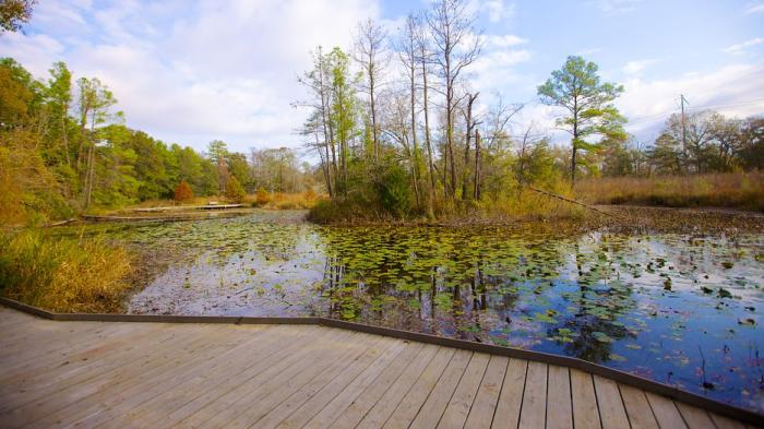 Walkway with view of water and trees at Houston Arboretum