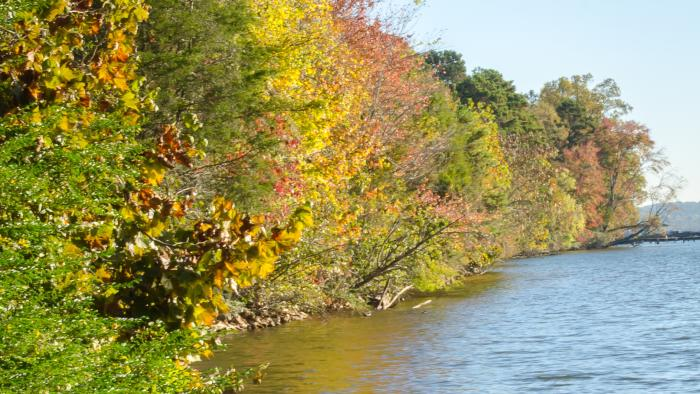 Fall foliage on the banks of Concord Park in Knoxville