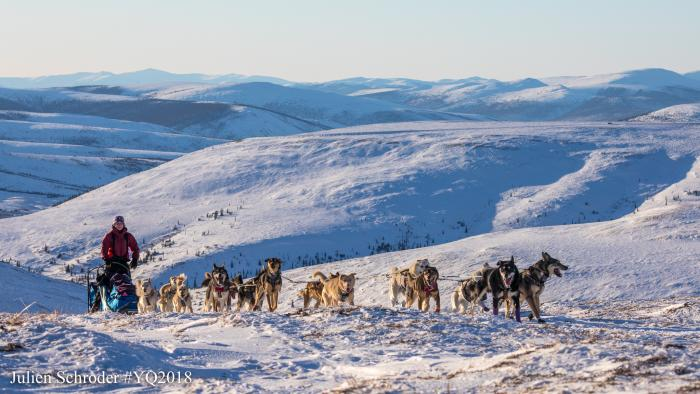Yukon Quest Musher Dog Sled