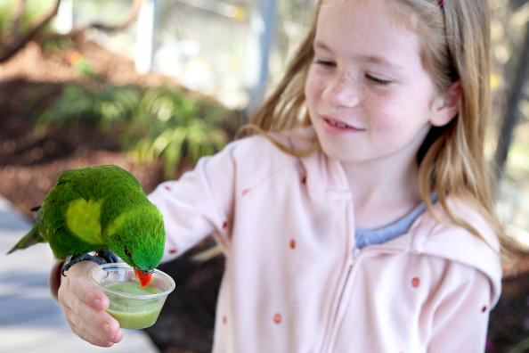 Lorikeet eats from a cup while perched on a little girl's arm at Lorikeet Landing