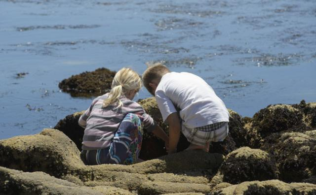 children in a tide pool