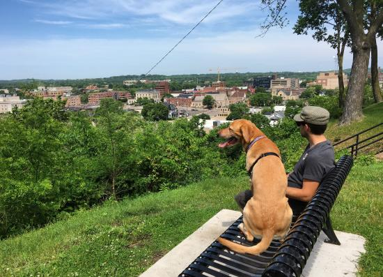Man and his dog on a bench overlooking Downtown Eau Claire