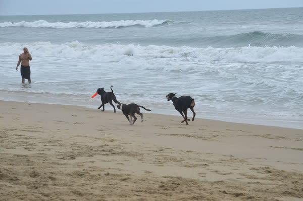 Pawesome Dog Beach