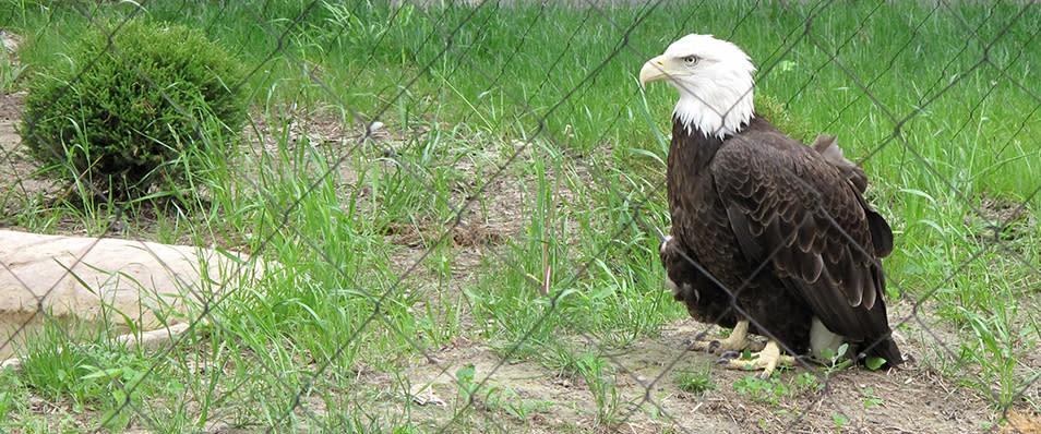 Potter Park Eagle