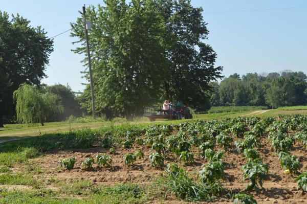wagon at Huber's Orchard