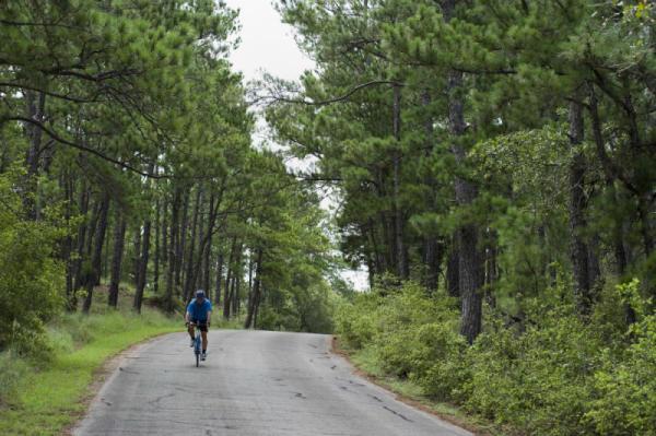 Man Biking Through Wooded Path