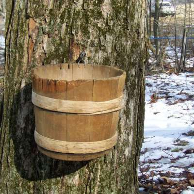 Somerset County Maple Producers Association