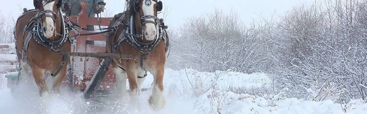 Champetre Sleigh Rides
