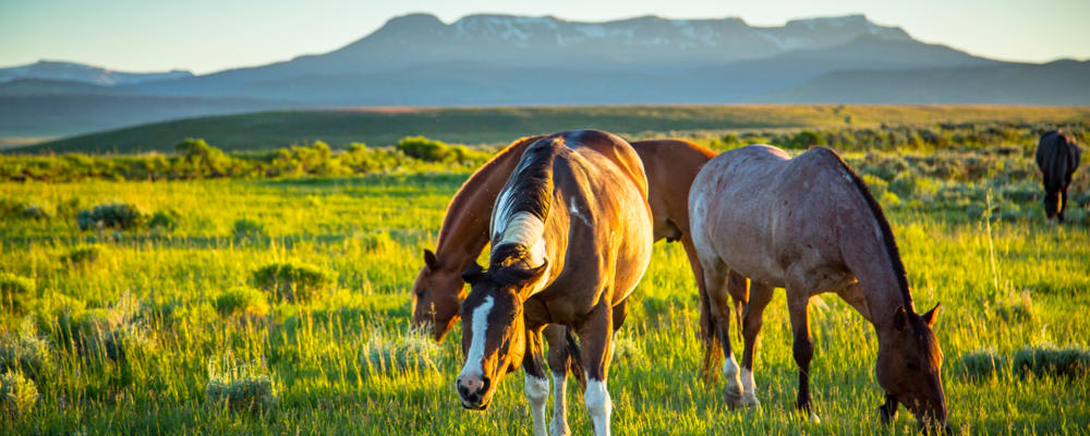 Horses_Flat Tops Wilderness_Steamboat Springs_Vacation Guide