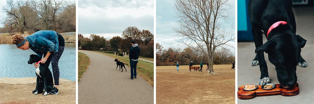 dog-park-overland-park