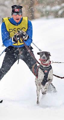 skijoring_man-pulled-by-dog