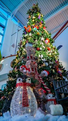 Ripley's Aquarium Festival of Trees