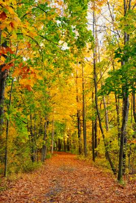 fall-hiking-trail