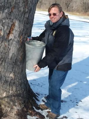 Park Naturalist Sarah Wolf tapping sugar maple trees at McCloud Nature Park ahead of Maple Syrup Days. (Photo courtesy of Hendricks County Parks & Recreation)