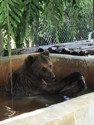 Bear having a bath at Octagon Wildlife Sanctuary