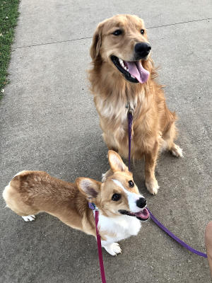 Kiki and Lily at Frisco Commons Park