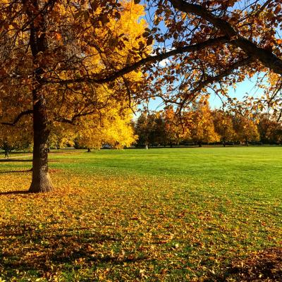 Cheesman Park Fall