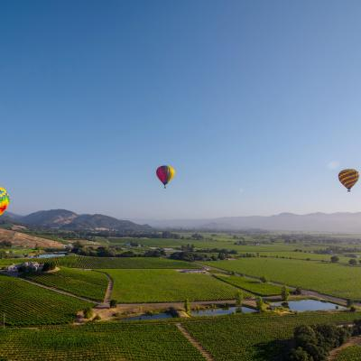 Hot air balloon over Napa Valley in summer