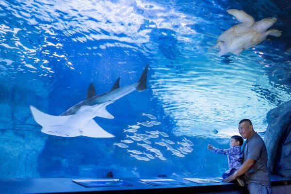 Newport Aquarium Shark Tunnel