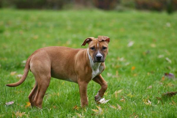 Beaumont Dog Park