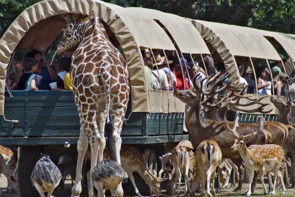 Get eye to eye with the animals at Global Wildlife Center