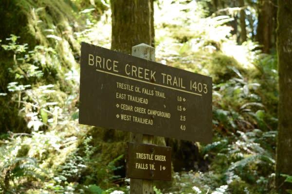 Brice Creek Trail Sign by Colin Morton