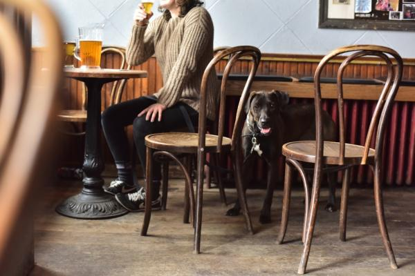 Dog at The Joynt in Eau Claire