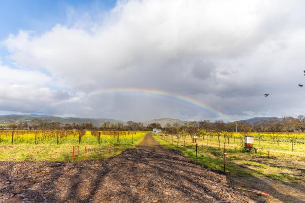 Rainbow Vineyards