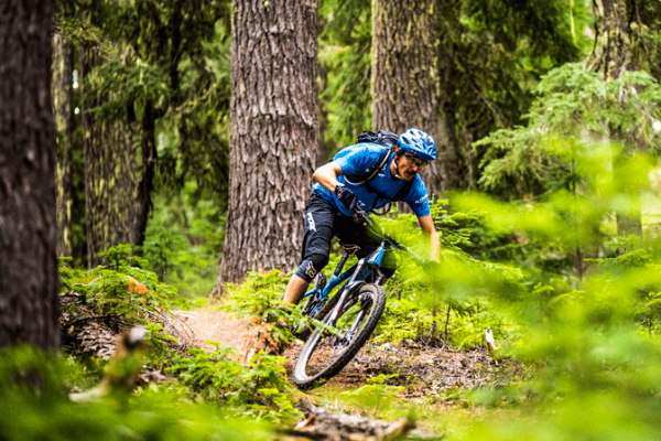 Mountain Biking Alpine Trail by Anthony Smith