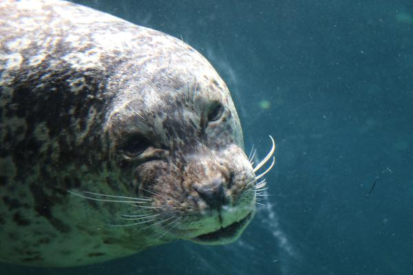 Harbor Seal Zoo