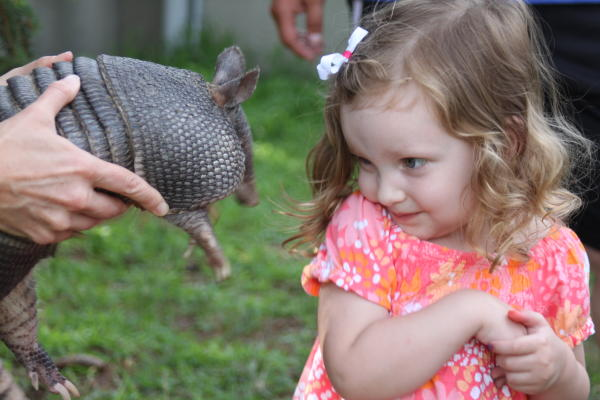 Armadillo Encounter