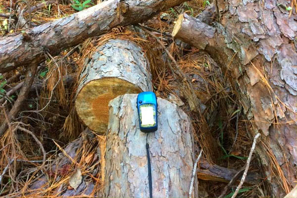 gps in forest