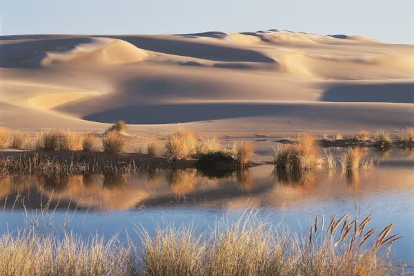Sand Dunes Near Florence by Eric Vaughan