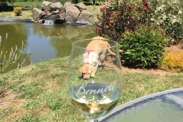 Baxter at Bennett Vineyard by Andy Vobora