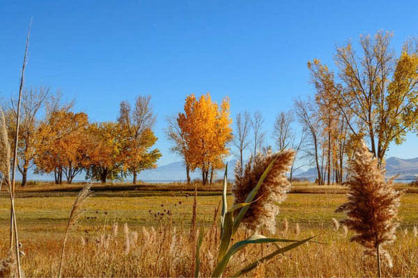 Scenic Drives for Fall Colors in Utah Valley