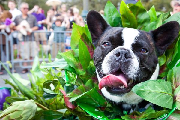 Mardi Paws Parade - dog