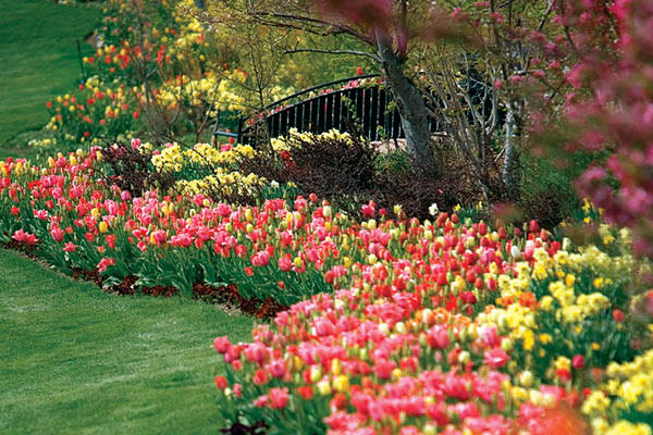 12 New Year's Resolutions to Conquer in 2019 in Utah Valley - Tulip Festival