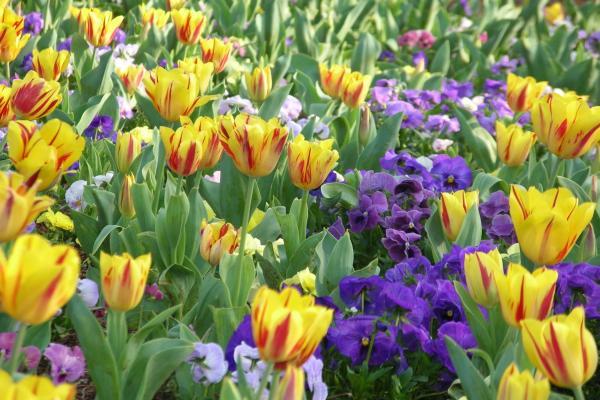 Huntsville botanical garden - Huntsville botanical gardens hours ...