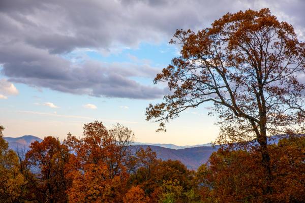 Shenandoah National Park View