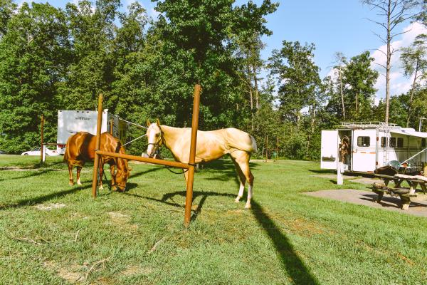 Horses And Trailer At Deam Lake