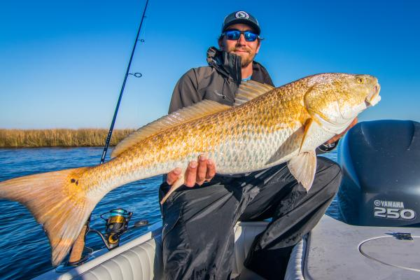 Redfish in Winter
